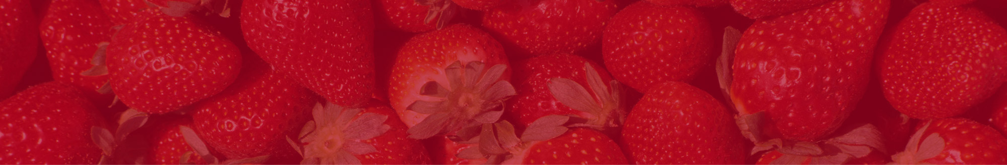 Fresas Campoberry