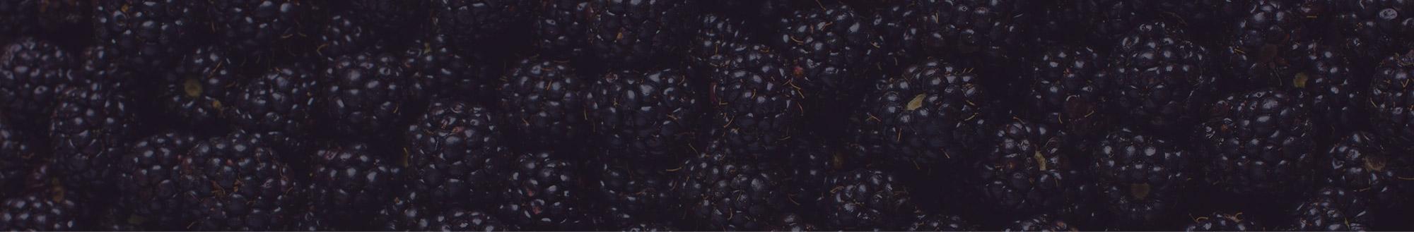 Moras Campoberry