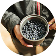 Venta de arándanos Campoberry